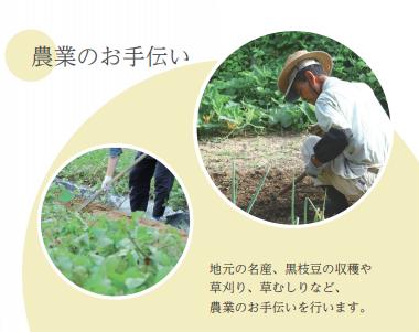 農業のお手伝い。地元の名産黒枝豆の収穫、草刈り、草むしりなど。